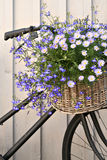 Floral bike. Old bike with basket of flowers Royalty Free Stock Photos