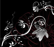 Floral black&white abstraction Royalty Free Stock Photos
