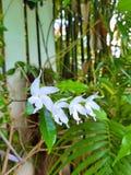 Floral blanc dans la barrière en bambou Photographie stock libre de droits
