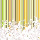 Floral blanco en fondo colorido Ilustración del Vector
