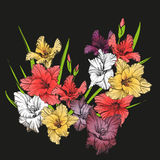 Floral blooming gladiolus hand drawn vector illustration Stock Photography