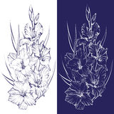 Floral blooming gladiolus hand drawn vector illustration. Sketch Royalty Free Stock Photos