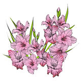 Floral blooming gladiolus hand drawn vector illustration. Sketch Royalty Free Stock Photo