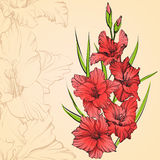 Floral blooming gladiolus hand drawn vector illustration Royalty Free Stock Images