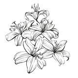Floral blooming lilies hand drawn vector illustration  sketch Stock Photo