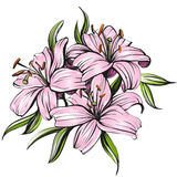 Floral blooming lilies vector illustration hand drawn painted watercolor Stock Photography