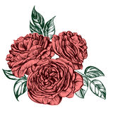 Floral blooming rose branch vector illustration  sketch Royalty Free Stock Photography