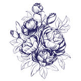 Floral blooming rose branch vector illustration sketch Royalty Free Stock Photo