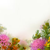 Floral Blossom Background. Summer Flowers Stock Photos