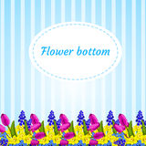 Floral blue background with flower buds narcissus Royalty Free Stock Image