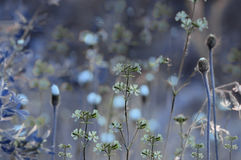 Floral blue background. Wildflowers on a  bokeh background. Close-up.  Soft focus Royalty Free Stock Photos