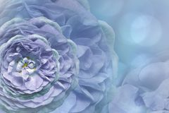 Floral blue-turquoise beautiful background.  Flower composition. Greeting card from blue-turquoise roses on a  light blue backgrou. Nd. Close-up. Nature Royalty Free Stock Photo