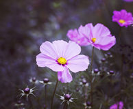 Floral blurred background with pink flower Royalty Free Stock Photography