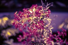Floral bokeh background. Natural bright colored wallpaper. Blurred background. vector illustration