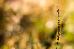 Floral bokeh with grass Royalty Free Stock Photography