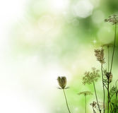 Floral Border. Beautiful Floral Border over Blurred Background royalty free stock photography
