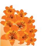 Floral border Stock Photos