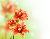 Floral Border. With red lily Royalty Free Stock Photography