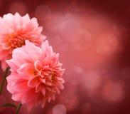 Floral border. With pink Dahlia Stock Photos