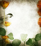 Floral border. A textured floral and bird border with text area stock photos