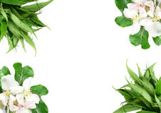 Floral border. Floral and leaves border over white background Stock Photo