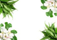Floral border Stock Photo