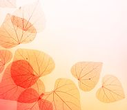 Floral Border of Autumn Leaves Stock Images