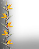 Floral border Bird Of Paradise Strelitzia Royalty Free Stock Photo