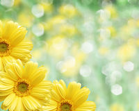 Floral border blurred background, flowers chamomile Stock Photos