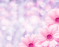 Floral border blurred background, flowers chamomile Stock Photo
