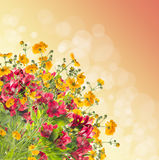 Floral border on bokeh background Stock Photos