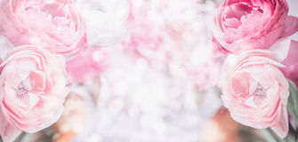 Floral border with close up of pink pale flowers and bokeh background. Pastel Festive greeting royalty free stock images
