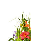 Floral border corner royalty free stock photography