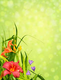 Floral border corner. Beautiful natural arrangement of flowers, capicunes and lilies, isolated on white background to make perfet floral border, corner Royalty Free Stock Image
