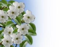Floral Border Dogwood blossoms royalty free illustration