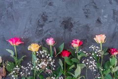 Floral border or frame with colorful roses stock photography