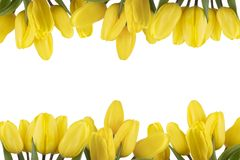 Frame of yellow tulips on a white background isolated Stock Image