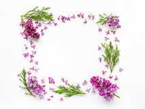 Floral border of fresh lilac flowers and juniper twigs on white. Stock Photos
