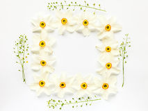Floral border of fresh narcissus flowers and hepherd's purses Royalty Free Stock Photos
