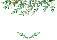 Floral border .Garland of a eucalyptus branches.Frame of a herbs. Watercolor hand drawn illustration.It can be used for greeting cards, posters, wedding cards Royalty Free Stock Photos