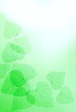 Floral Border of Green Leaves Stock Photo
