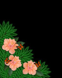 Floral border Hibiscus and butterflies stock photography
