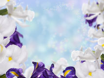 Floral Border with Iris Flower. On the Colorful Background royalty free stock image