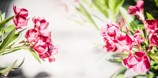 Floral border with lovely red blooming, oleander flowers Stock Photos