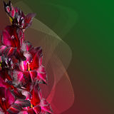 Floral border - maroon gladiolus with velvety petals Royalty Free Stock Photography