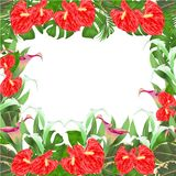 Floral border natural background with blooming lilies Cala and anthurium, palm,philodendron and ficus vector Illustration for use. In interior design, artwork Stock Image