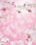 Floral border with Orchid Stock Photography