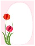 Floral border - pink. Beautiful white spring flowers / tulips on pretty pink background cute floral border Royalty Free Stock Images