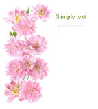 Floral border with pink Dahlia Royalty Free Stock Photos