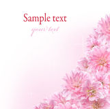 Floral border with pink Dahlia Stock Photo